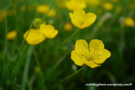 wildflowers-1